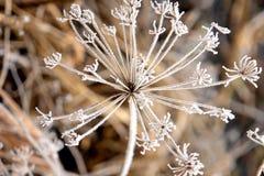 fryste blommor Royaltyfria Foton