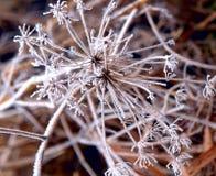 fryste blommor Arkivbilder