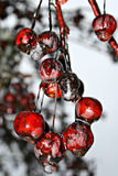 fryste Cherry Royaltyfri Fotografi