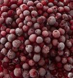 fryste cranberries Royaltyfria Bilder