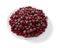 fryste cranberries Arkivfoto