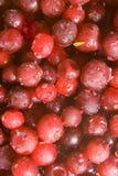 fryste cranberries Royaltyfri Bild