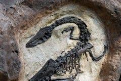 Fósil Fotografía de archivo