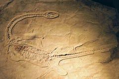 F?sil de dinosaurio Fotografía de archivo libre de regalías