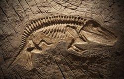 Fósil de dinosaurio modelo Foto de archivo libre de regalías