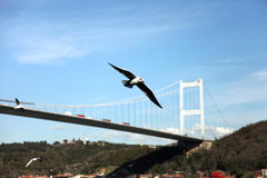 FSM Bridge and Seagull Royalty Free Stock Images