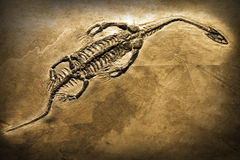 Fóssil Imagem de Stock