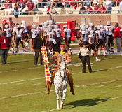 FSU's Chief Osceola Riding Renegade Stock Images
