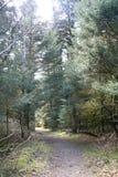 Ft Abecrombie,阿拉斯加道路在森林里 免版税库存照片
