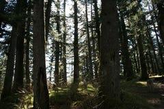 Ft Abercrombie阿拉斯加森林 免版税库存照片