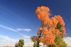 Ftree del otoño Imagenes de archivo