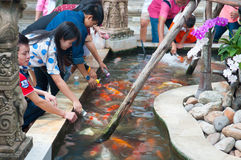 Fütterungskoi fischen mit Milchflasche im Bauernhof Lizenzfreie Stockfotos
