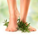 Fuß auf Grün Stockfotos