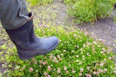 Fuß in den Gummistiefeln, welche die Blumen trampeln Lizenzfreies Stockfoto