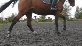Fuß des Pferds laufend auf dem Sand Schließen Sie oben von den Beinen, die aus den nassen schlammigen Grund galoppieren stock footage