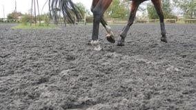 Fuß des Pferds laufend auf dem Sand Schließen Sie oben von den Beinen, die aus den nassen schlammigen Grund galoppieren stock video footage