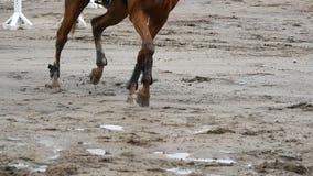 Fuß des Pferds laufend auf Schlamm Schließen Sie oben von den Beinen, die aus den nassen schlammigen Grund galoppieren Langsame B stock video footage