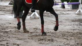 Fuß des Pferds laufend auf Schlamm Schließen Sie oben von den Beinen, die aus den nassen schlammigen Grund galoppieren Langsame B stock footage