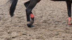 Fuß des Pferds laufend auf Schlamm Schließen Sie oben von den Beinen, die aus den nassen schlammigen Grund galoppieren Langsame B stock video