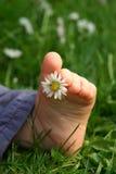 Fuß im Gras Stockfoto