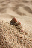 Fuß im Sand unter Sonne Lizenzfreie Stockfotografie
