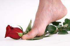 Fuß mit einer Rose Lizenzfreie Stockfotos