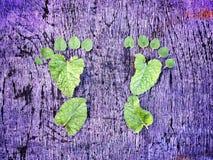 Fuß von den Blättern Stockbild