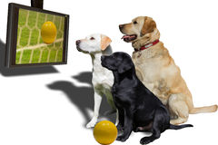 Fußball auf Fernsehapparat stockbild
