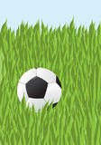 Fußball in einem Gras Stockbild