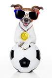 Fußballfußballhund mit Ball Stockbild