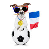 Fußballfußballhund mit Ball Lizenzfreie Stockfotos