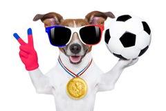 Fußballfußballhund mit Ball Lizenzfreies Stockfoto
