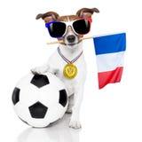 Fußballfußballhund mit Ball Lizenzfreie Stockbilder