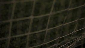 Fußballkugel im Netz stock video