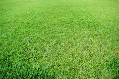 Fußballneigung des grünen Grases Stockfotografie