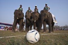 Fußballspiel - Elefantfestival, Chitwan 2013, Nepal stockbild