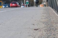 Fußgänger trat in ein Hündchen stockfoto