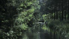 Fußgängerbrücke über dem Kanal mit Enten in einem grünen Park, Catherine Park, Tsarskoye Selo Pushkin, St Petersburg stock video