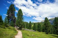 Fußgängerweg in den Dolomit Stockbilder