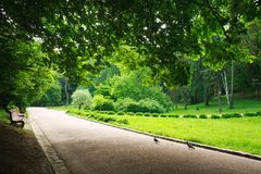 Fußgängerweg im Sommergrün-Stadtpark auf Hintergrund von Bäumen Lizenzfreies Stockfoto