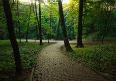 Fußgängerweg im Sommergrün-Stadtpark auf Sonnenuntergang Lizenzfreie Stockbilder