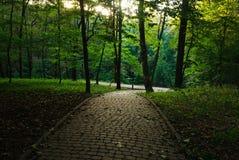 Fußgängerweg im Sommergrün-Stadtpark auf Sonnenuntergang Stockfotografie