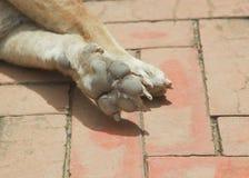 Fußhund Lizenzfreie Stockfotos