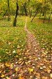 Fußpfad im Park Stockfotos