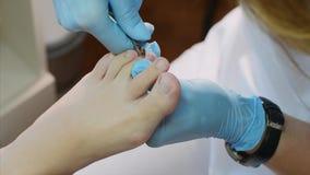 Fußpfleger schneidet Häutchen auf Zehe mit Nagelzangen macht Pediküre im Schönheitssalon stock footage