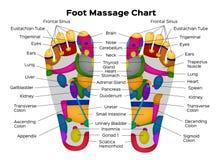 Fußreflexzonenmassagediagramm mit Beschreibung der inneren Organe und der Körperteile Auch im corel abgehobenen Betrag anatomie lizenzfreie abbildung