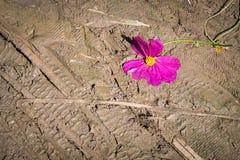 Fußschritt sterben an Blume Stockfotografie