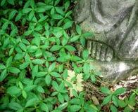 Fußstatue in verlassenem Kirchhof im Wald, Singrün Forg Lizenzfreies Stockfoto