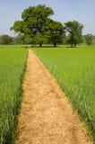 Fußweg über einem Gras-Feld Stockfotos