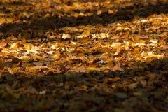 Fußweg bedeckt mit buntem Herbstlaub lizenzfreie stockfotografie